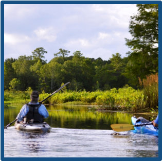 Blackwater swamp tours near Mt. Pleasant with amazing wildlife, beautiful marsh, plantations