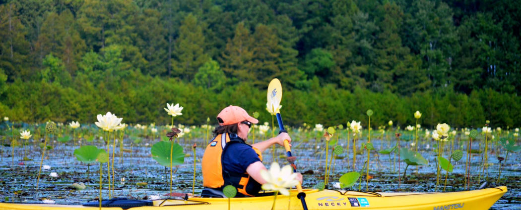 Kayak nature tours on Lake Moultrie colorful flowers near Charleston SC