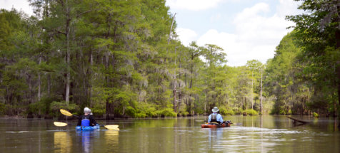 Things to do in Santee, Santee State Park, Poinsett State Park, Kayak Nature Tours